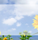 예바라기(web).jpg