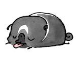 Pug Poses Sleepy Tongue JPEG.jpg
