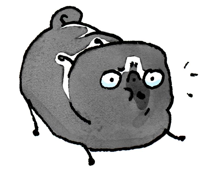 Pug Poses Woof JPEG.jpg