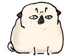Pug Poses Miffed JPEG.jpg