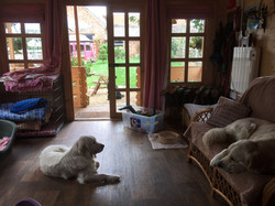 Dogs room