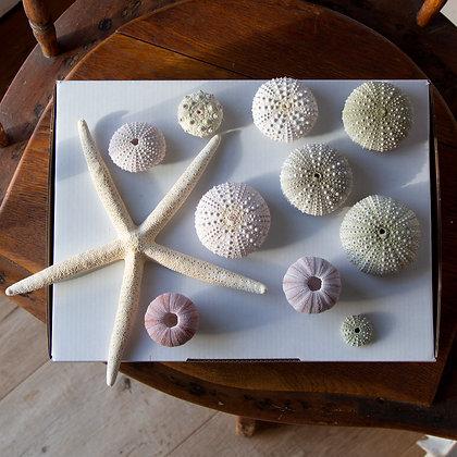 Urchin Gift Pack B
