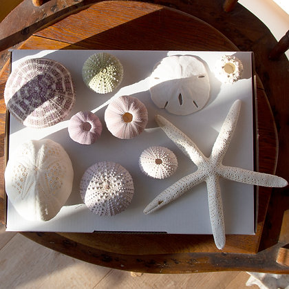 Urchin Gift Pack A