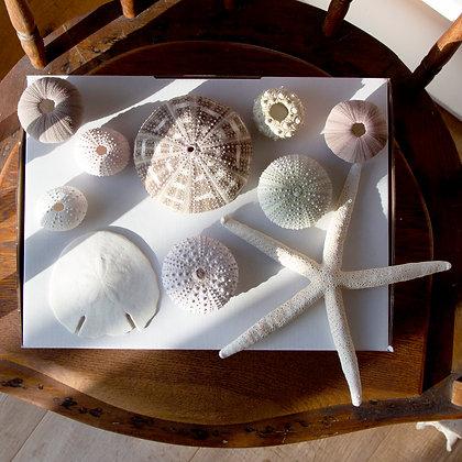 Urchin Gift Pack E