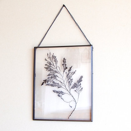 Framed Seaweed Pressing I