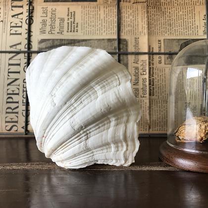 Vintage Double Clam