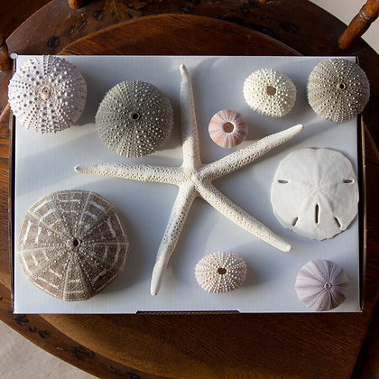 Urchin Gift Pack F