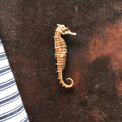 Small Vintage Seahorse