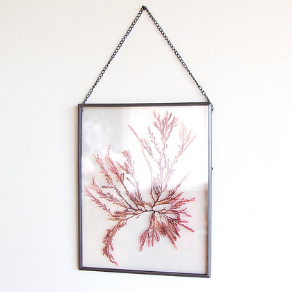 Framed Seaweed Pressing G