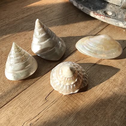 Collection of Nacre Shells