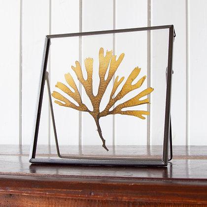 Framed Seaweed Pressing E