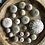 Thumbnail: Urchin Collection B