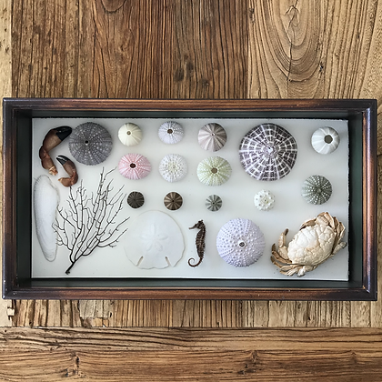 Natural Nautical History Collection