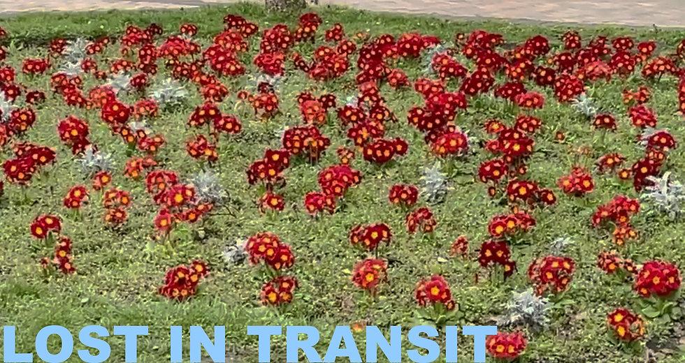 lost in transit ballpark collective 3.jpg