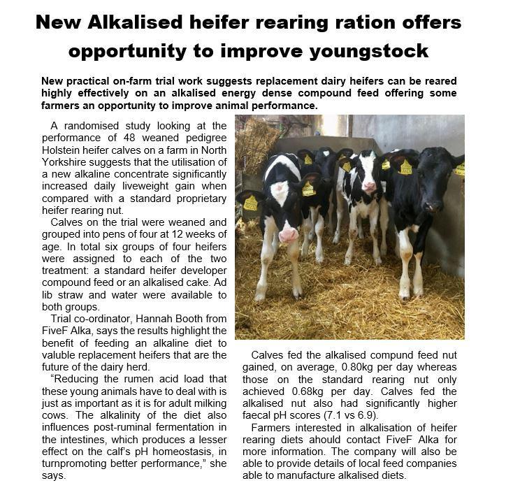 Alkalised heifer.JPG
