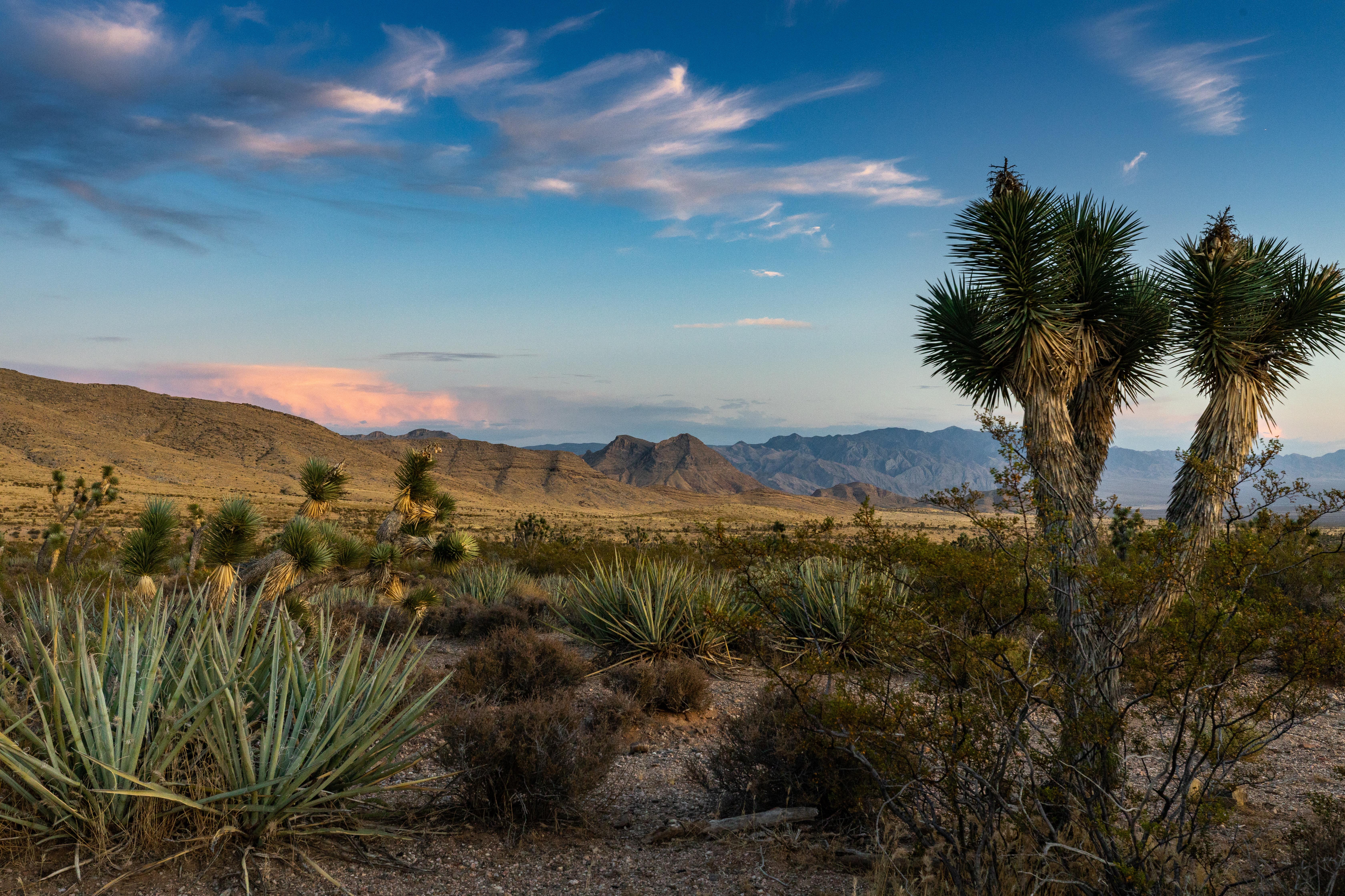 Joshua Desert