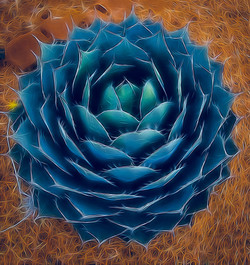 Artistic Agave ~ Turquoise / Rust