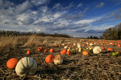 Magic Pumpkin Patch