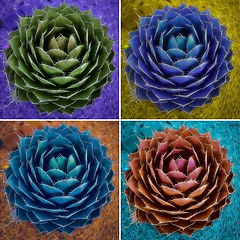 agave art pictures
