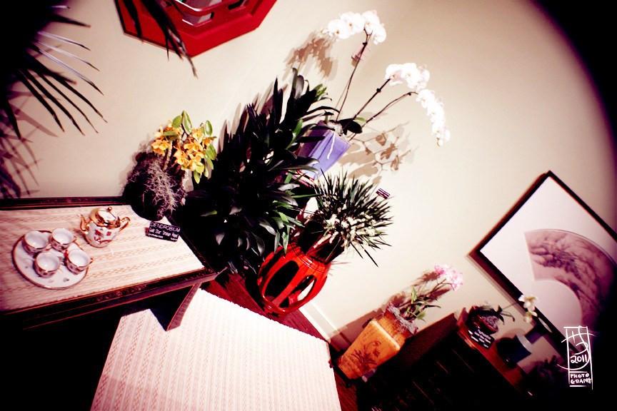 DC Orchids 03