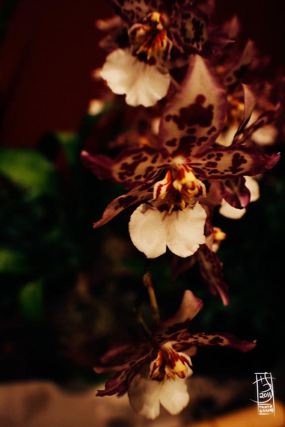 DC Orchids 01