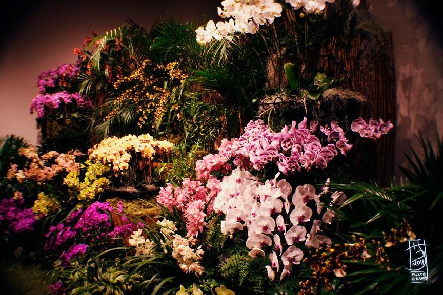 DC Orchids 04