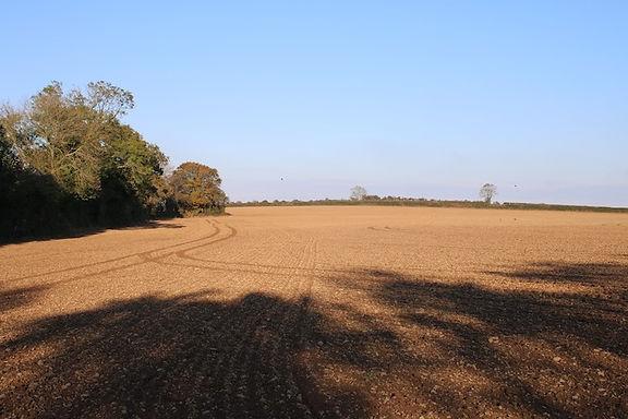 Morrison-field.jpg