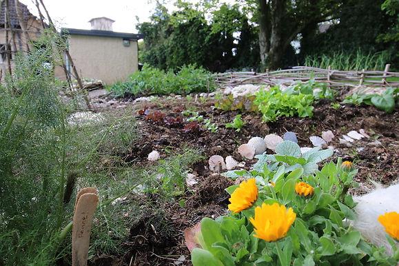 Fennel-monks-garden.jpg