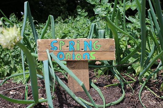 spring onion sign.jpg