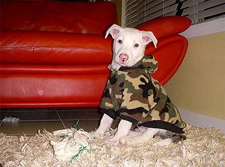Pete as puppy.jpg