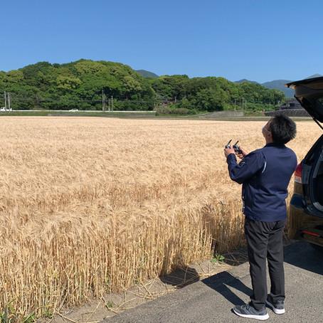大麦圃場の赤外線解析
