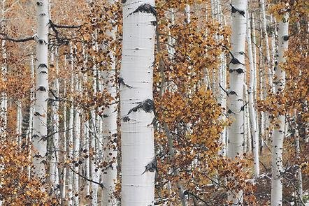 Dry Woods