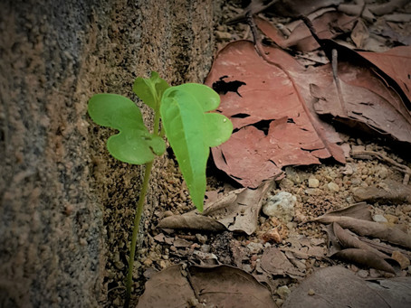 Seed of Resilience
