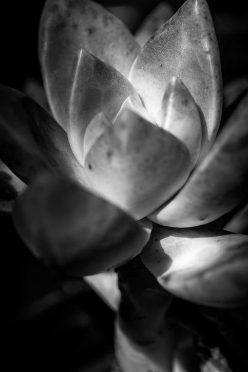 plants-2-2.jpg