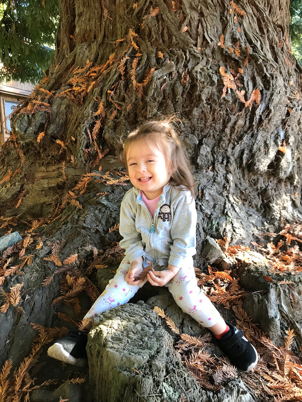 Cute smiling toddler sitting on the trunk of a tree