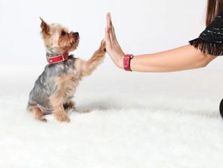 Psi i Valentinovo