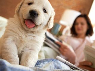 Dovodite novog psa doma? Evo što trebate znati