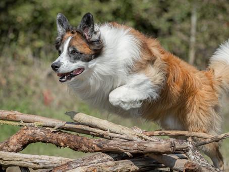 06/06 : Séances photos de chiens dans l'action dans la périphérie de Bruxelles
