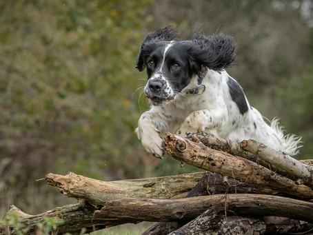 24/05 : Séances photos de chiens dans l'action à Vilvorde
