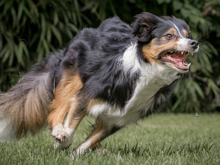 05/09 : Séances photos de chiens dans l'action à Florennes