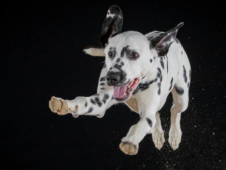 24/01 : Séances photos de chiens dans une grange