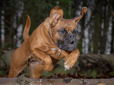 14/02 : Séances photos portraits chien-humain à Wavre
