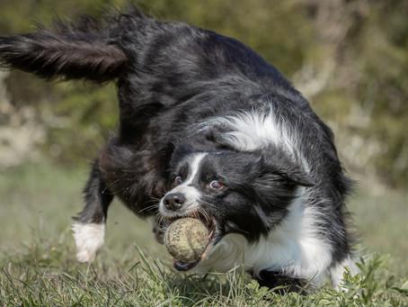10/07 : Séances photos de chiens en action à Sclessin