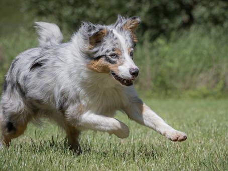 19/09 : Séances photos de chiens en action à Sclessin