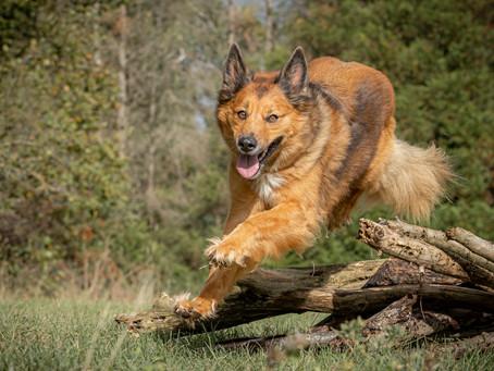 18/04 : Séances photos de chiens dans l'action à Bouge