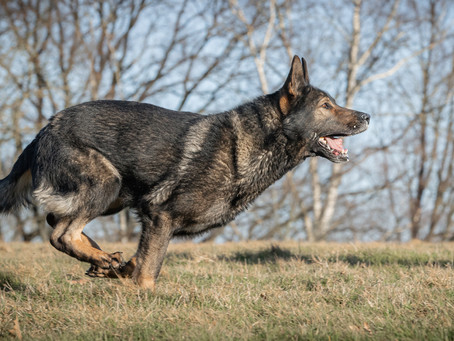 23/05 : Séances photos de chiens dans l'action à Wavre