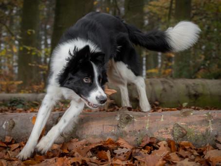 03/01 : Séances photos portraits chien-humain à Wavre
