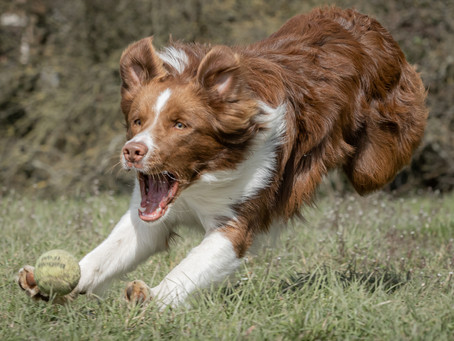 04/07 : Séances photos de chiens dans l'action à Wavre