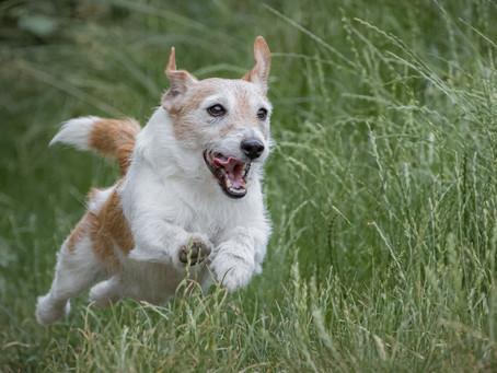 29/08 : Séances photos de chiens dans l'action à Bouge