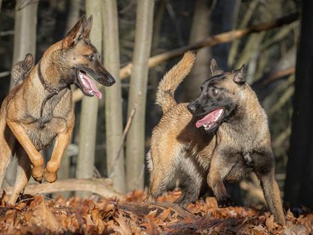 21/02 : Séances photos de chiens dans l'action à Wavre